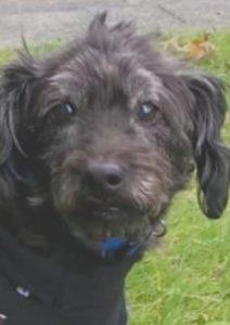 Portrait of pet Bailey dog
