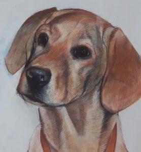 Dog bella pet portrait